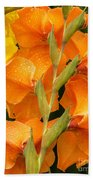 Full Stem Gladiolus Beach Towel