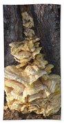 Fungi On Oak Beach Towel