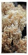Fungus 10 Beach Towel