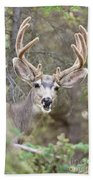Funny Mule Deer Buck Portrait With Velvet Antler Beach Towel