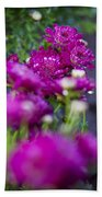 Fuschia Mums 1 Beach Towel