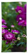 Fuschia Mums 2  Beach Towel