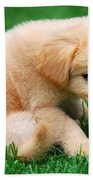 Fuzzy Golden Puppy Beach Towel by Christina Rollo