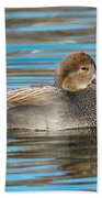 Gadwall Duck Drake Swimming Beach Towel