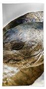 Galapagos Giant Tortoise V2 Beach Towel