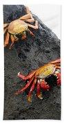 Galapagos Islands 02 Beach Towel