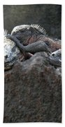 Galapagos Islands 09 Beach Towel