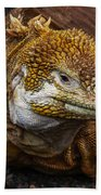 Galapagos Land Iguana  Beach Towel by Allen Sheffield