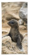 Galapagos Sea Lion Pup Champion Islet Beach Towel