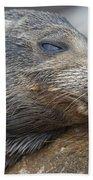 Galapagos Sea Lion Sleeping Beach Towel