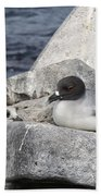 Galapagos Seagull And Her Chick Beach Towel