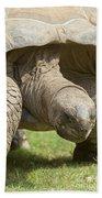 Galapagos Turtle Beach Towel