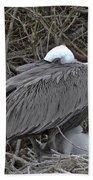 Galapagos - Watchful Pelican Beach Towel