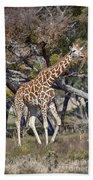 Galloping Giraffe  Beach Towel