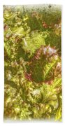 Garden Lettuce - Green Gold Beach Towel