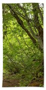 Garibaldi Old Growth Cedars Beach Towel