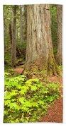 Garibaldi Wilderness Rainforest Beach Towel