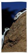 Garter Snake Genus Elapsoidea Beach Towel