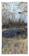Gator Football Beach Towel by Al Powell Photography USA