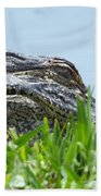 Gator Watching Beach Towel