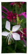 Gaura Lindheimeri Whirling Butterflies With Agastache Ava Beach Towel
