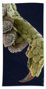 Gecko Foot Sem Beach Towel