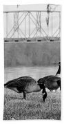 Geese By The Ohio Beach Towel