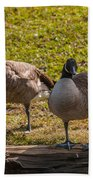 Geese On A Log Beach Towel