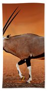 Gemsbok On Desert Plains At Sunset Beach Towel