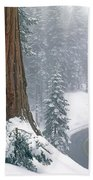2m6836-generals Highway In The Giant Sequoias Beach Towel