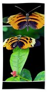Gentle Butterfly Courtship 01 Out Of Bounds Beach Towel