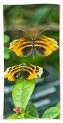 Gentle Butterfly Courtship 01 Beach Towel