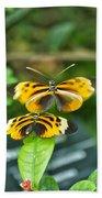Gentle Butterfly Courtship 02 Beach Towel