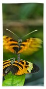 Gentle Butterfly Courtship 03 Beach Towel