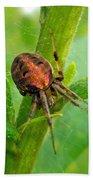 Genus Araneus Orb Weaver Spider - Brown And Orange Beach Towel