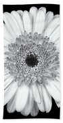 Gerbera Daisy Monochrome Beach Towel by Adam Romanowicz