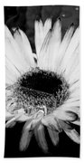 Gerbera In Black And White Beach Towel