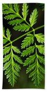 Gereric Vegetation Beach Sheet
