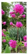 German Catchfly Pink Beach Towel