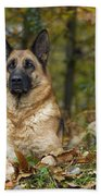 German Shepherd Dogs Beach Towel