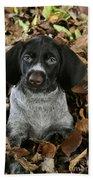German Wire-haired Pointer Puppy Beach Towel