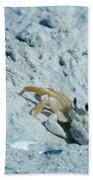 Ghost Crab Beach Towel