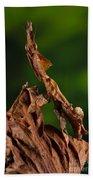 Ghost Or Dead Leaf Mantis Beach Towel