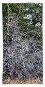 Ghost Trees 1 Beach Towel