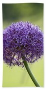 Giant Allium Flower Beach Towel
