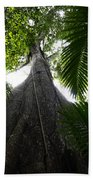 Giant Cashew Tree Amazon Rainforest Brazil Beach Towel