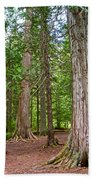 Giant Cedars On Trail Of The Cedars In Glacier Np-mt Beach Towel