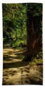 Giant Douglas Fir Trees Collection 2 Beach Towel