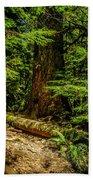 Giant Douglas Fir Trees Collection 3 Beach Towel