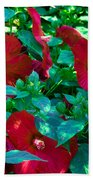 Giant Poppies Beach Towel